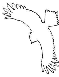 illustration process: owl_scan_owlsketch