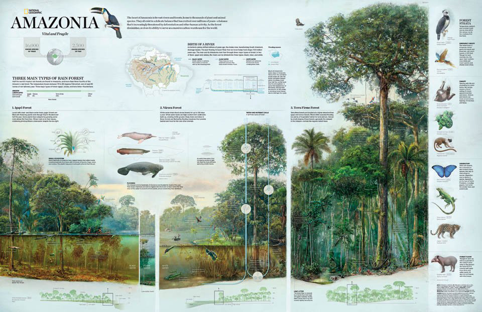 national-geographic-infographic-amazonia