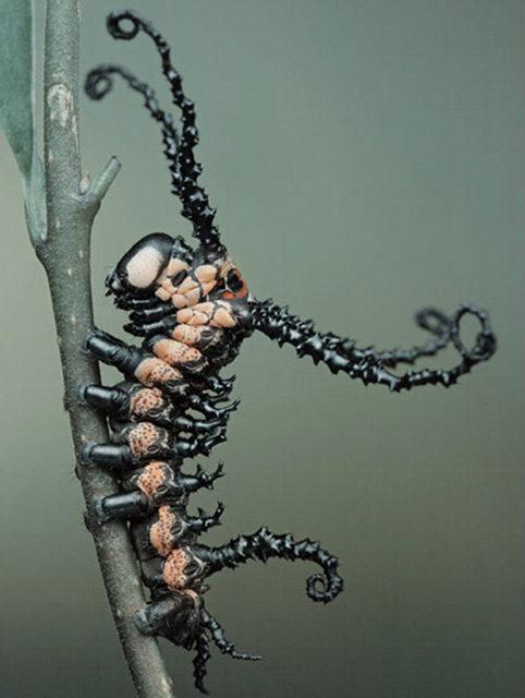 Brahmin moth caterpillar, from a series of macro photos on Odd Stuff Magazine
